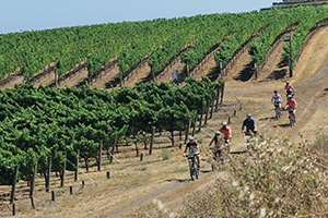 Photo Credit: Courtesy of Napa Valley Bike Tours