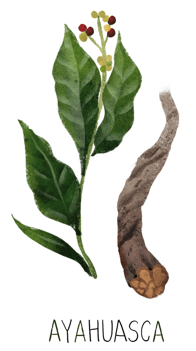 02-ayahuasca-dutton-adapt-676-1.png