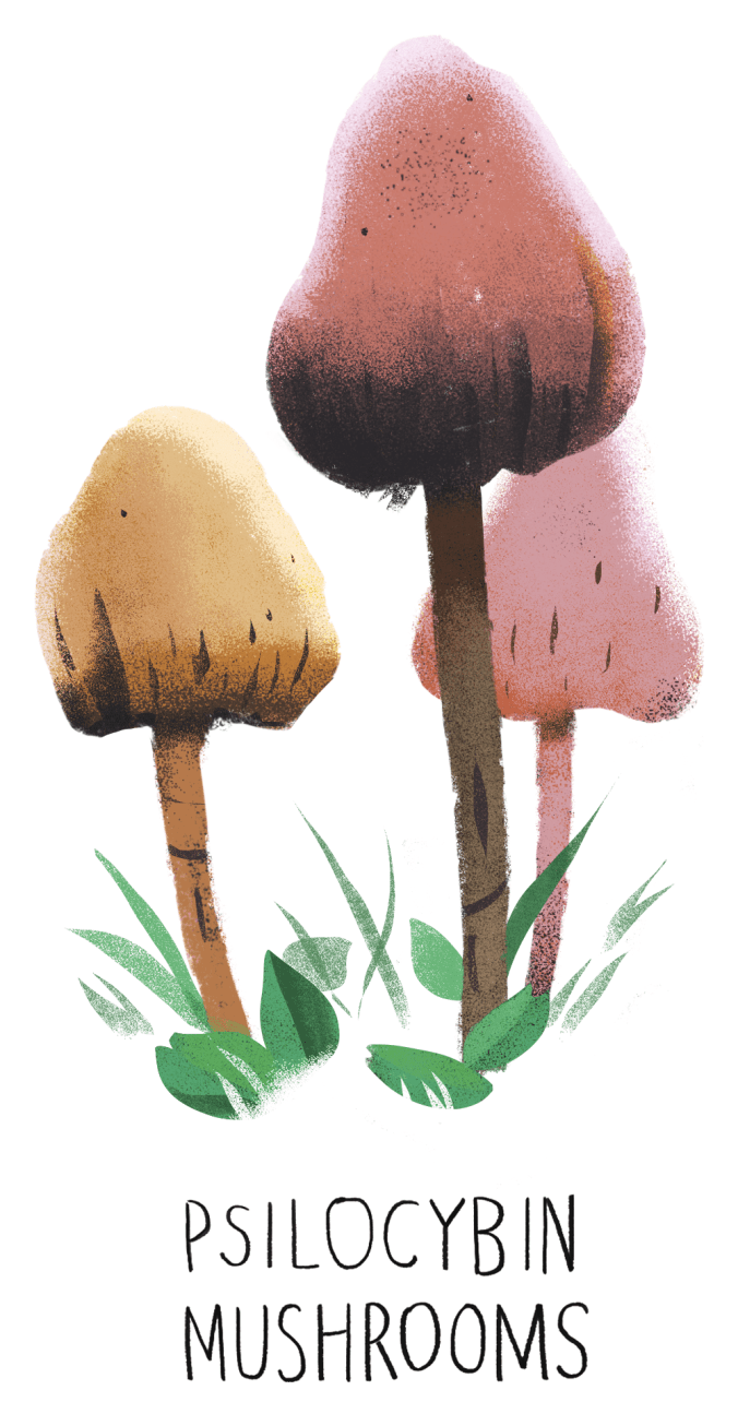 05-mushrooms-dutton-adapt-676-1.png